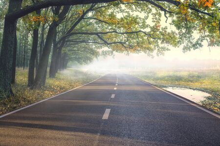 Autumn forest and road in thick fog Imagens