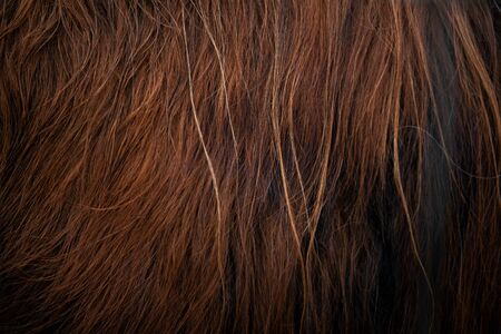 Seamless Texture of red yak wool - close-up