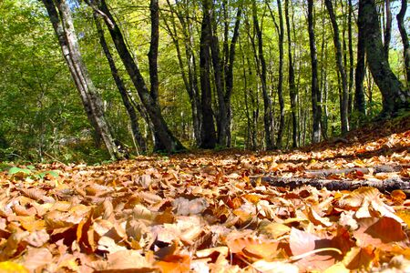Autumn forest leaves a look. Autumn leaves of the earth. Autumn forest landscape.