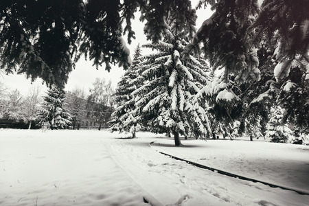 Beautiful snowy weather and winter park wint trees covered by snow Banque d'images