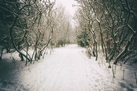 A winter park with trees covered by snow Banque d'images