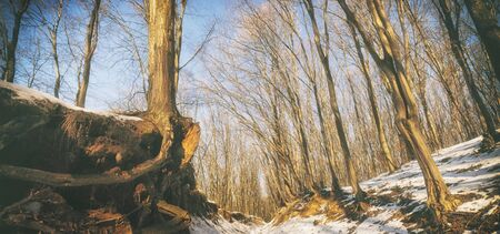 Beautiful forest in winter Banque d'images