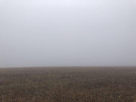 background of foggy field. horizon. gloomy weather