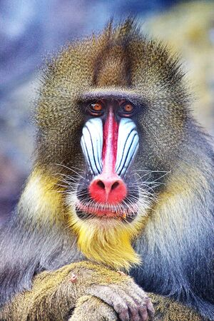 reflects: The monkey reflects Stock Photo