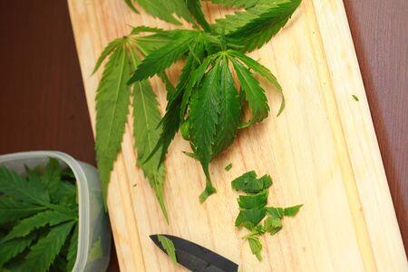 raw: Fresh hemp leaves for salad preparation. The medical cannabis