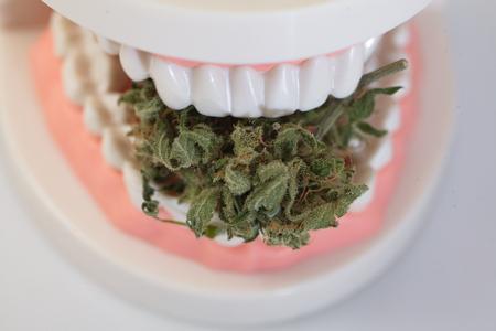 marijuana cannabismarijuana and cannabis. legal drug Stock Photo
