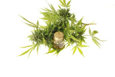 cannabis and hemp