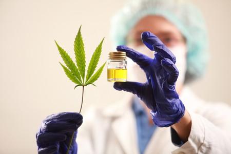 Kobieta lekarz posiadający liść konopi i oil.alternative medicine