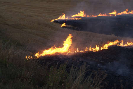 dry field burning flame