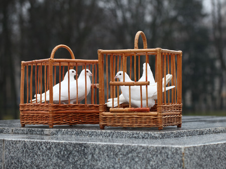 white doves in a wooden cage Banque d'images - 94822454