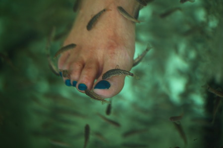 spa fish pedicur Stockfoto