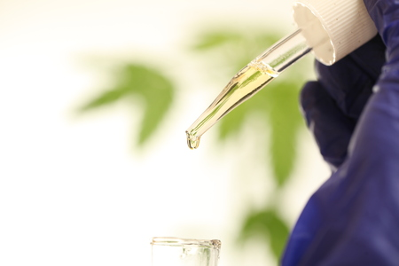 Plant in laboratory medical marijuana cannabis oil Stock Photo