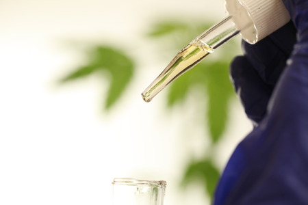 Plant in laboratory medical marijuana cannabis oil Banque d'images