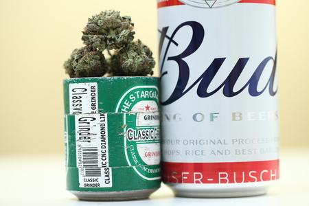 Belarus, Minsk, March ,10 :  f Budweiser popular world quality beer and medical cannabis marijuana