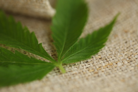 cannabis leaf hemp fabric texture