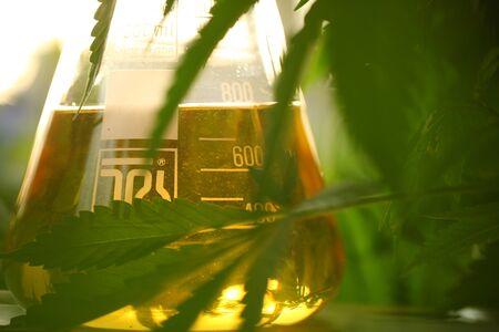 Medical marijuana cannabis cbd oil Banco de Imagens