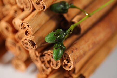ceylon cinnamon sticks wholesale packaging