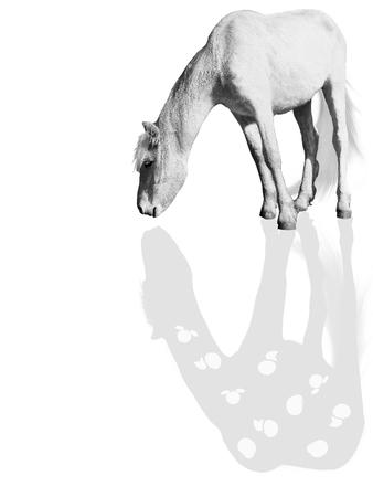 cognicion: caballo blanco en el proceso de la cognici�n misma Foto de archivo