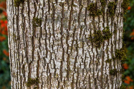 outflow: Grey tree bark Pattern for Background or texture Stock Photo