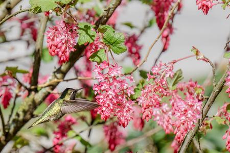 small green hummingbird bird near the flowers on blury background Фото со стока