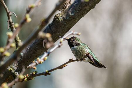 small green hummingbird bird on the branch with blury background