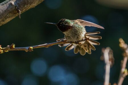 small green hummingbird bird on the branch with dark blury background Stock Photo