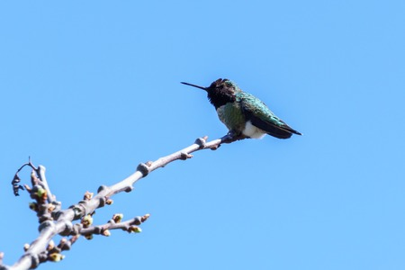 small hummingbird bird on the branch against clean blue sky