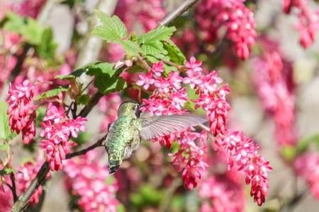 green hummingbird bird near the flowers on blury background