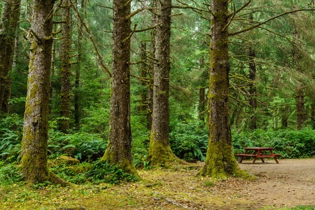Green old forest with camp site and wooden picnic table in the mountain of British Columba Canada