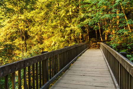 pedestrian bridges: Wood bridge on the forest part of a hiking trail Stock Photo