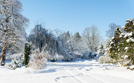 Beautiful winter forest landscape with snow covered trees