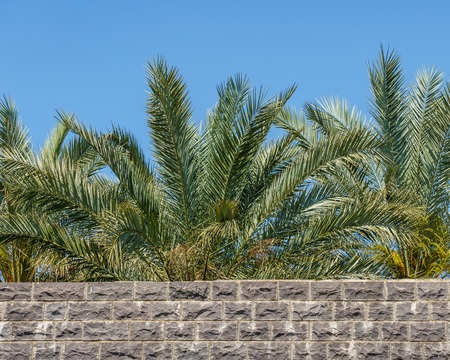 Stone wall with palm trees behind and blue sky