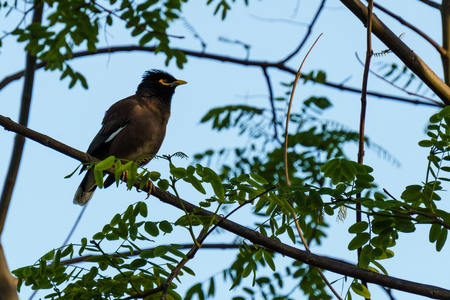 small wild bird on tree branch with green leaves