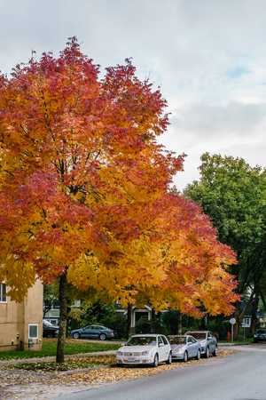 VANCOUVER, CANADA - October 1, 2018: street view residential area autumn time golden leaves