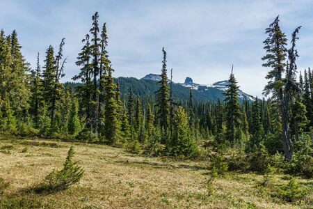 Scenic view of green medow with distant Black Tusk mountain summer morning in garibaldi provincial park canada