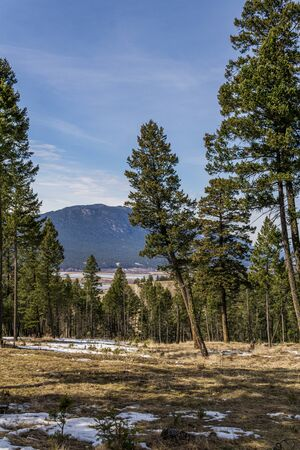 spring time at canadian rocky mountain park with snow and green trees Stock Photo