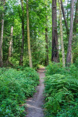 chemin de randonnée ou sentier dans la forêt entouré de buissons verts et d'arbres sur l'île de vancouver