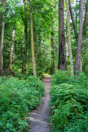 hiking path or trail in forrest surrounded by green bushes and trees on vancouver island 스톡 콘텐츠
