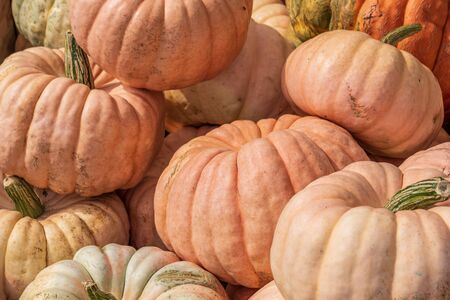 Lots of pumpkins all around at open air market vivid colors Stock Photo