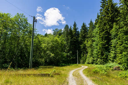 Empty forest road in Golden Ears Provincial Park British Columbia Canada.