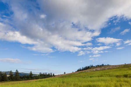 a hill covered with lush green grass under a blue sky with clouds in British Columbia Canada 免版税图像