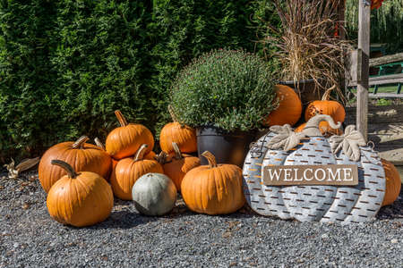 Harvested pumpkins on the ground at the entrance as welcome sign 免版税图像