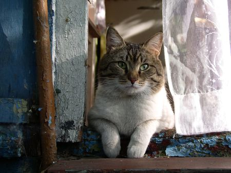 dniper: The cat sitting on the threshold of country house Stock Photo