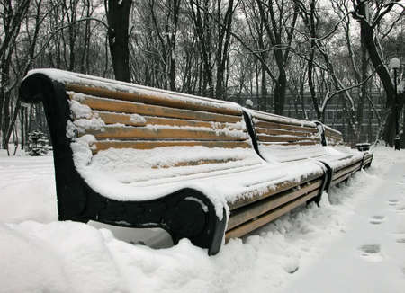 The stark snow-covered benches,  asleep trees, the snowy empire Stock Photo - 687418