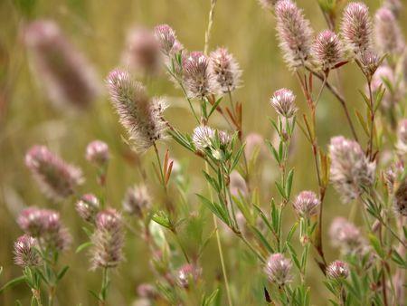 緑の草と野生の花の草原
