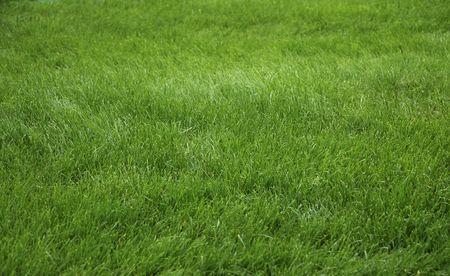 単に新鮮な緑の芝生フィールドの花の咲く庭園
