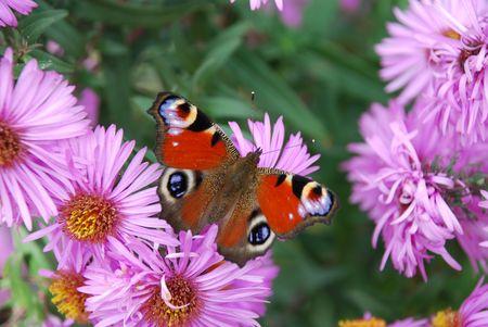 大きな花やぼやけた背景に明るい蝶