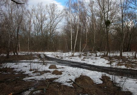 The impassable road in spring wood, snow melting, bare trees, soil and stick photo