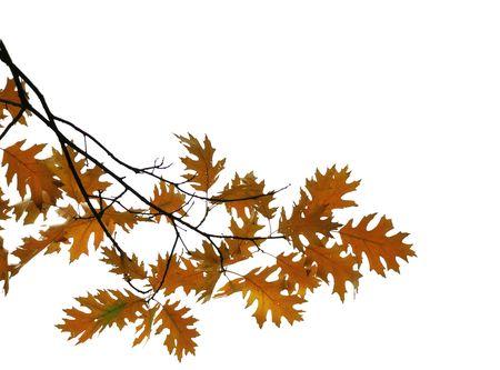 分離した白い背景に黄色と茶色の葉。秋。秋。