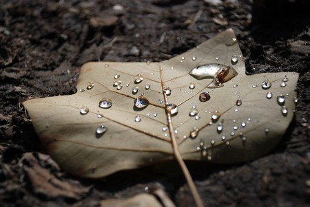 Autumn beige leaf with water drops shining on dark ground, close to surface